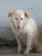 Hunde aus Italien suchen dringend Plätze!!! Ein ganzes Leben im Canile! - Seite 2 9650776kyk