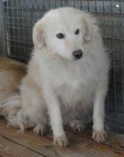 Hunde aus Italien suchen dringend Plätze!!! Ein ganzes Leben im Canile! - Seite 2 9650777egl