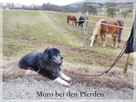 Hunde aus Italien suchen dringend Plätze!!! Ein ganzes Leben im Canile! - Seite 3 9836836idx