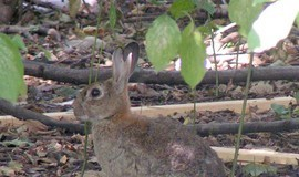 מידע על ארנבון [: Ijijzbmztdd2