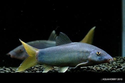 เรื่องของปลาหมูๆที่ไม่หมู (Pig house ver.) 5384715797_3bcc4dff03