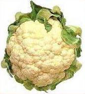 المقلوبة الفلسطينية  Cauliflower