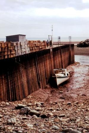 موسوعة المد و الجزر- حصريا على منتدى واحة الإسلام Bay_of_Fundy_Low_Tide