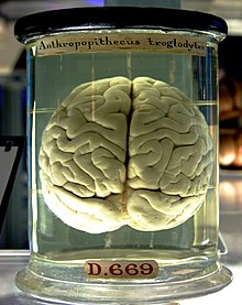 Truri - Faqe 2 220px-Chimp_Brain_in_a_jar