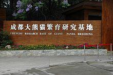 الباندا العملاقة 220px-Chengdu_panda_breeding
