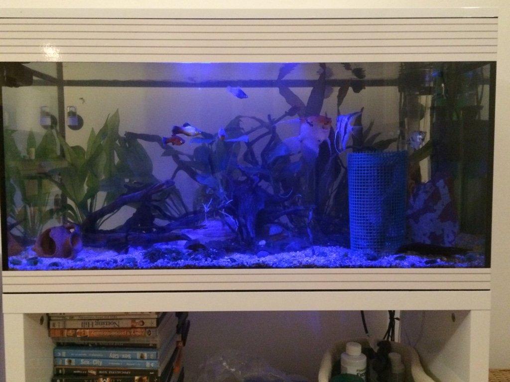 Mon premier aquarium 94L (ASKOLL PURE LED) 6f77a34aaf71cb9a943a05d4d702b720
