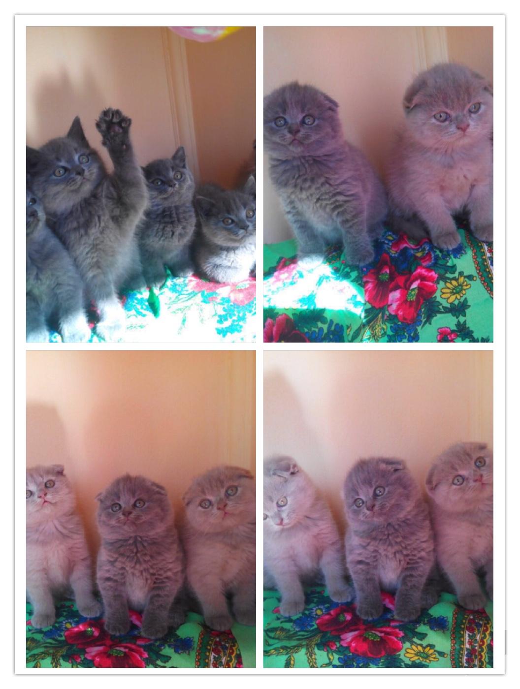 قطط صغيرة للبيع 2021 - منتدى بيع وشراء قطط الشيرازي والهملايا 188e7d664d826e02b3c56cd8fd907d33