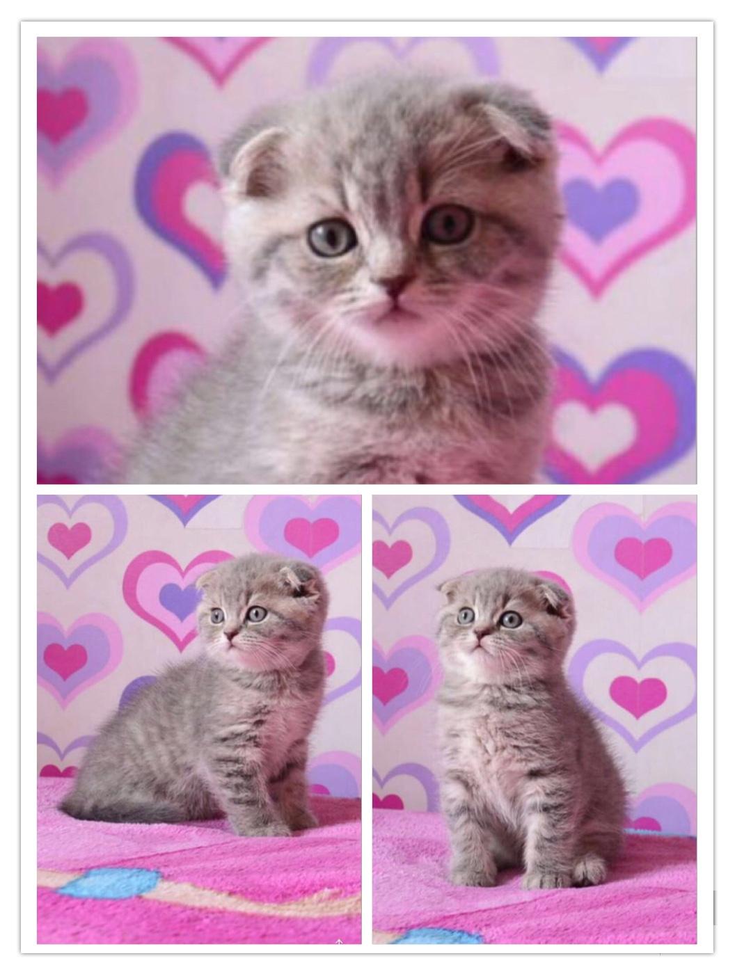 قطط صغيرة للبيع 2021 - منتدى بيع وشراء قطط الشيرازي والهملايا 8d5d7dac1878a49f2a08e5a634781de8