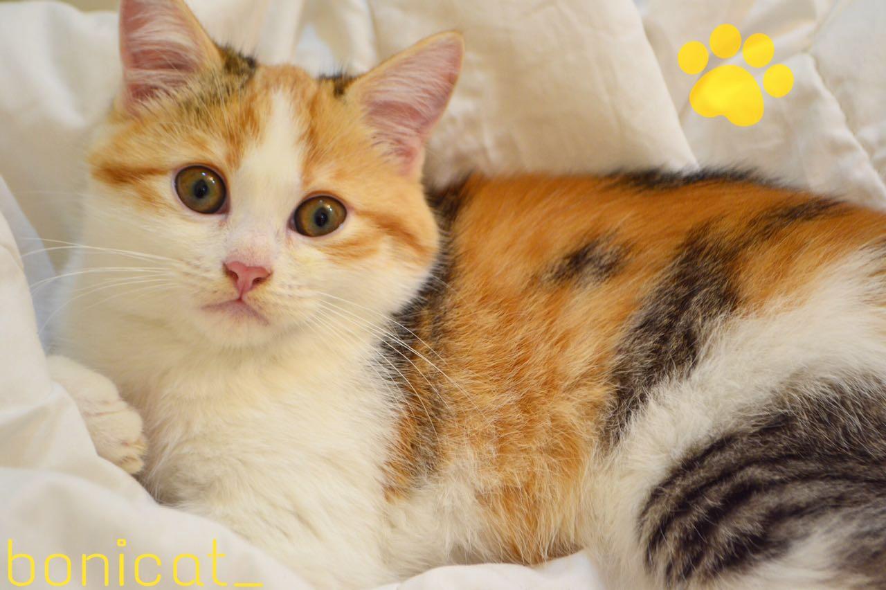 قطط صغيره للبيع فائقة الجمال 2020 77ebe513ac1d38d4adc09b50ca1824c0
