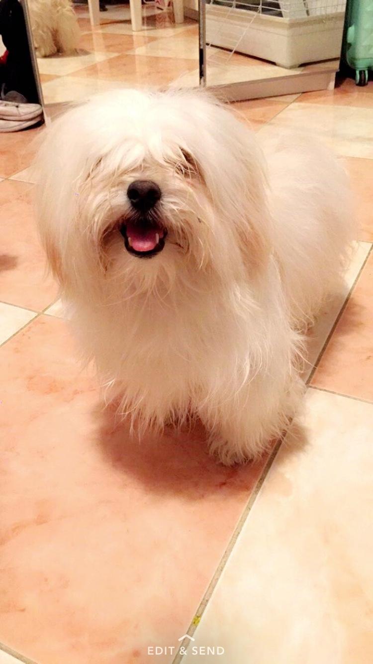 كلب مالتيز للبيع  بجدة 45052e61c2ea5efb0b08ce148516c9f8