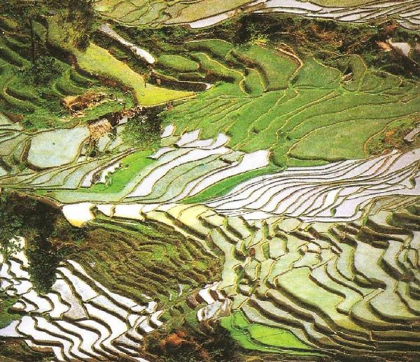 Cultivos de arroz en JApon Terrazas