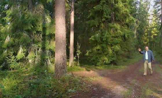 Découvrez la forêt norvégienne Upm_forest_life