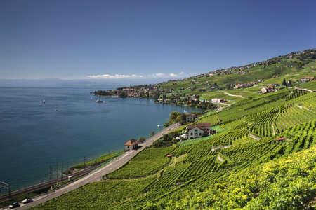 Site Martine 6/01/2015 trouvé par Martin 29385426-vue-sur-le-lac-de-geneve-des-vignes-de-lavaux-vaud-suisse