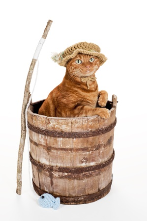 RENNES CAFE Z ancien fil - Page 20 14926332-un-chat-tigre-orange-portant-un-chapeau-de-pecheur-crochet-et-debout-dans-un-vieux-seau-en-bois-surm