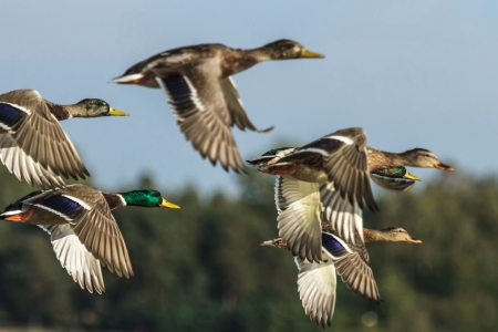 La joie de l'Évangile/Citation/209<>216 16608116-de-nombreux-oiseaux-volent-dans-le-ciel-serie-nature