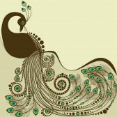 عم تتحدث الصور عن جمال الطاوس 18083932-peacock