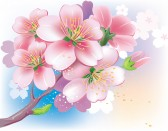 Язык форума 9626456-flowers-of-sakura