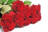 Čestitke, pozdravi, blagdani - Page 4 4538425-nice-bouquet-red-roses-on-isolated-background