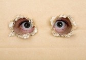 Sushi - Suzanne Visser  4163510-peeping-ojos-a-traves-de-agujeros-en-un-carton