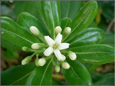 Εικόνες Φυτών... Image021