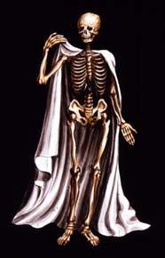 Téléchargement de Jaky ;o) Squelette