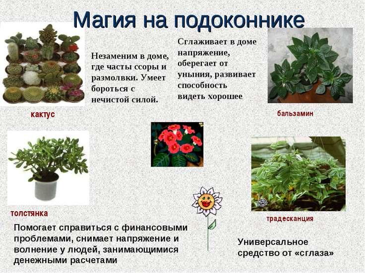 Магия растений Img21