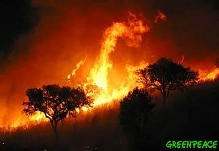¿Que es una Ola de calor? Incendio-forestal-en-andalucia