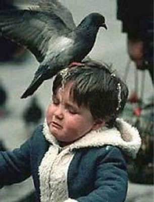 Je voudrais... Pigeon_merde