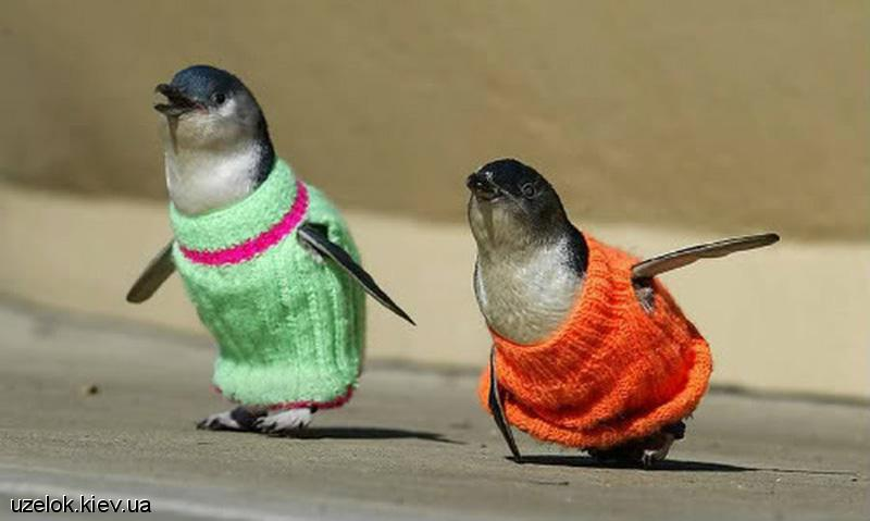 Зажигалочки с 3Ф -1 - Страница 2 New-zealand-penguins-1