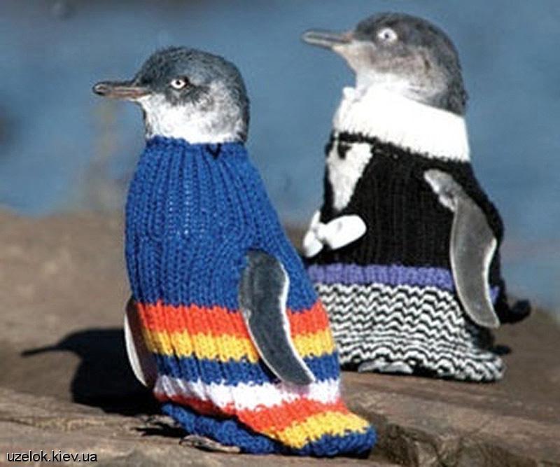 Зажигалочки с 3Ф -1 - Страница 2 New-zealand-penguins-4