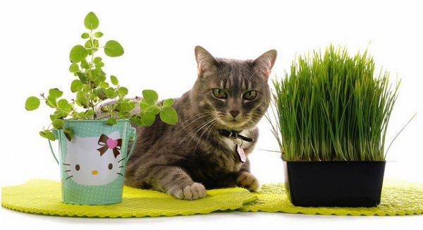 коты и цветы 08e3c02a414887ca5fe7618703bc5b20