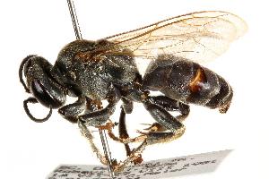 Bộ sưu tập côn trùng 2 CCDB-28926-B08%2B1449170430