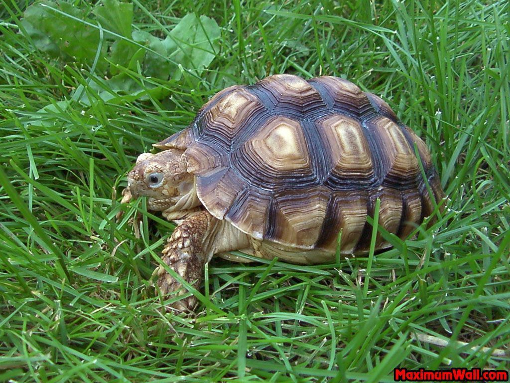 la tortue Xu8y4xq6