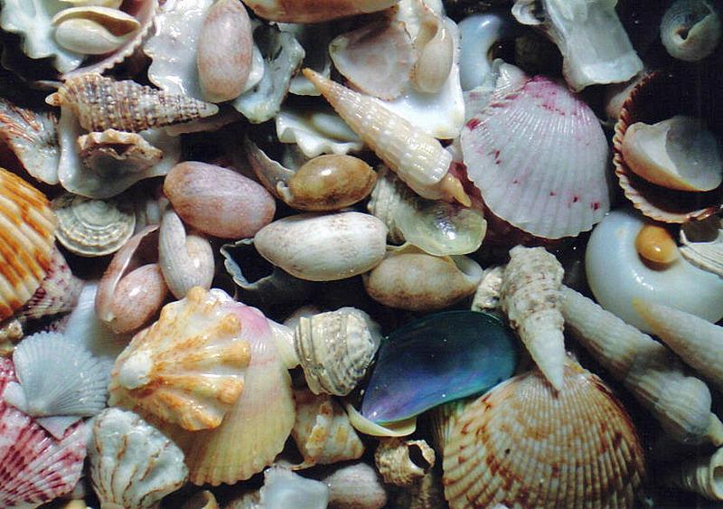 ΚΑΛΟ ΚΑΛΟΚΑΙΡΙ !!!!! Shells