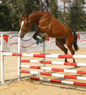 Konji Litanie%20verte