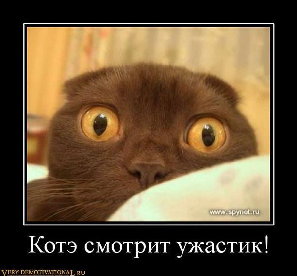 подборка от стасевича 1298546979_307489_kote-smotrit-uzhastik