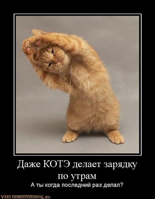 подборка от стасевича 1298636176_573099_dazhe-kote-delaet-zaryadku-po-utram