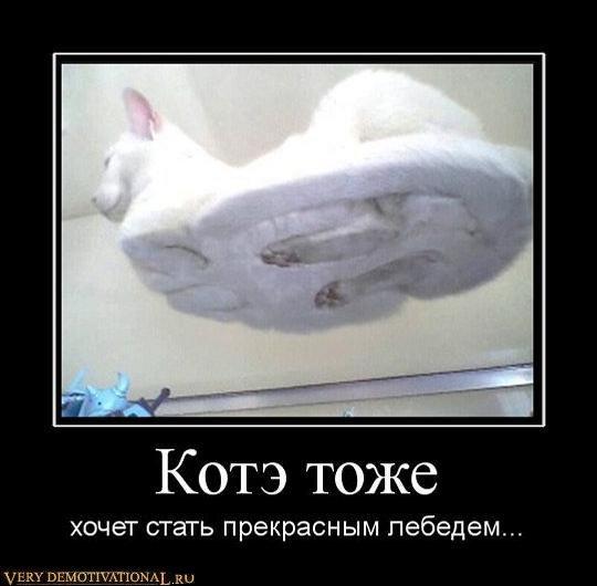 подборка от стасевича 1298638199_782890_kote-tozhe