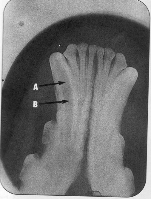Зубы и зубная формула Untitled-Scanned-11