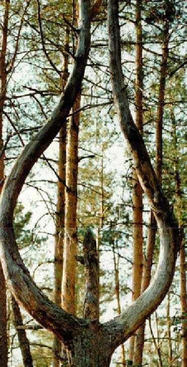 L'elfigraphe, photographe de l'invisible Ins598