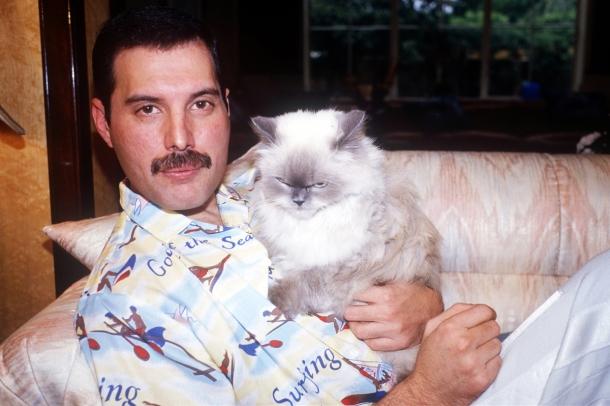 "Эпоха  Королевы""... - Страница 4 Freddie-mercury-with-cat1"