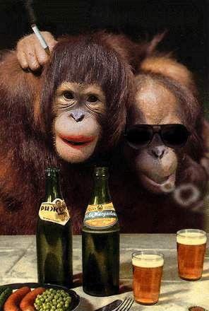 Majmuni Majmuni