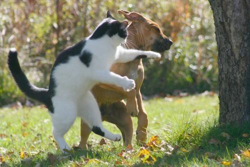 Ce n'est pas mon anniversaire... Combat-chat-chien