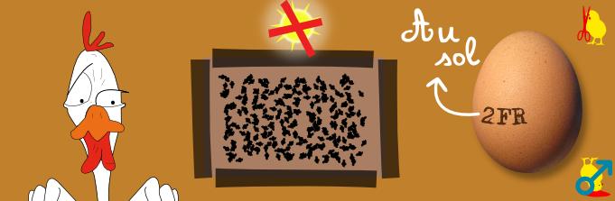 Marquage des oeufs et étiquetage : 0, 1, 2, 3 et ce que cela signifie Bandeau-oeuf-code-2-au-sol