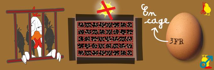 Marquage des oeufs et étiquetage : 0, 1, 2, 3 et ce que cela signifie Bandeau-oeuf-code-3-en-cage