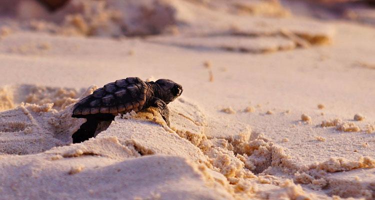 Bienvenidos al nuevo foro de apoyo a Noe #282 / 24.08.15 ~ 30.08.15 - Página 37 Vivir-lentamente-tortuga