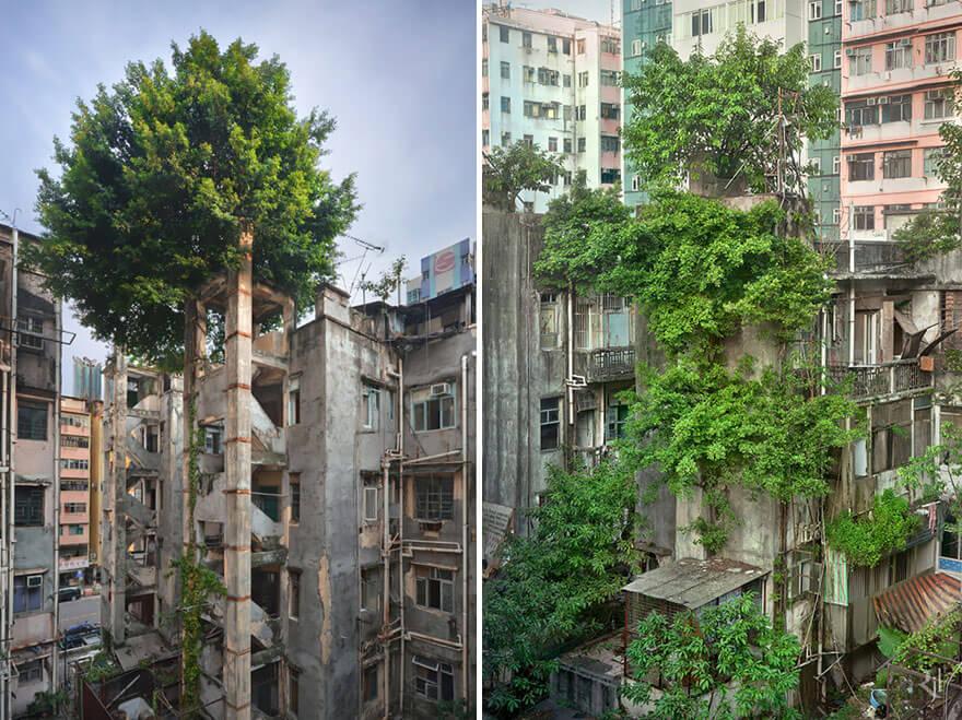 La fin de la fin du monde, climat et evolution Nature-reprend-droits-gagne-combat-contre-civilisation-2