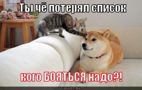 Маленький столик за углом - Том II - Страница 6 Lol-cat04