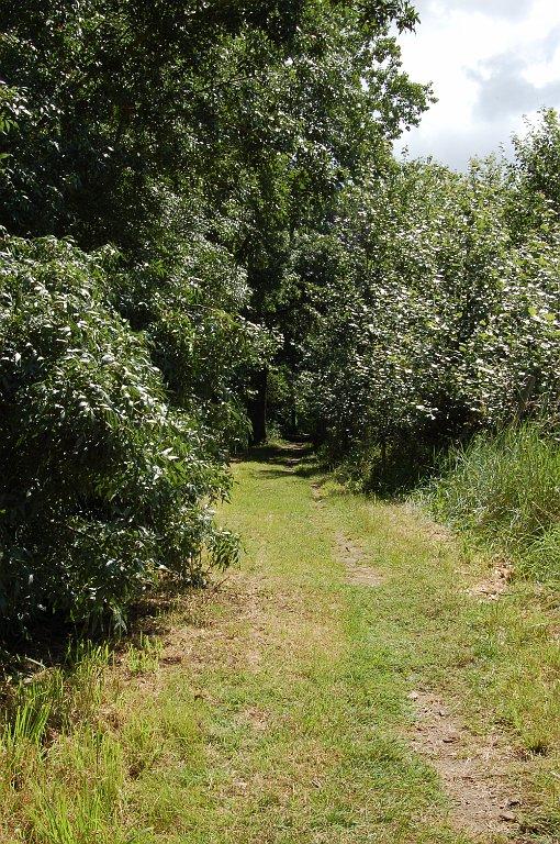 [bank] Vos photos de référence perso : Environnements naturels DSC_0025