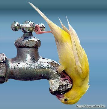 RAZNE SLIKE Vysmadnuty-papagaj